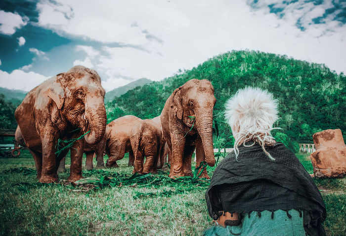 Volunteering At Elephant Shelters Became Our New Way Of Travelling