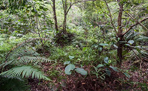 Can You Find All 12 British Soldiers Camouflaged In The Brunei Jungle?