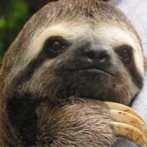 Venomous Sloth