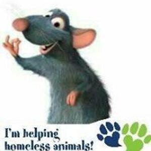 Rats Kishna