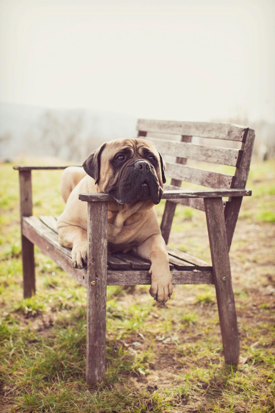 Last Portraits Of A Beloved Dog