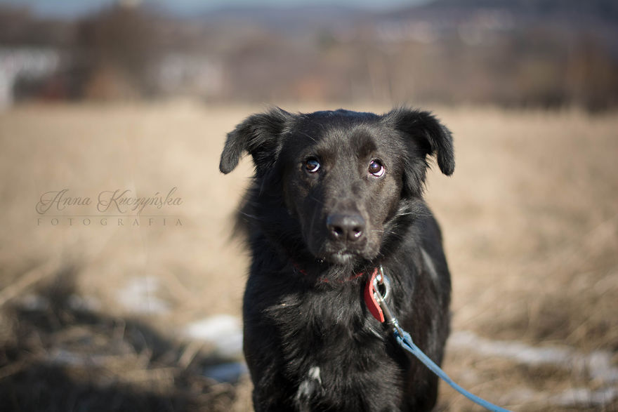 I Photograph Dogs To Help Them Get Adopted