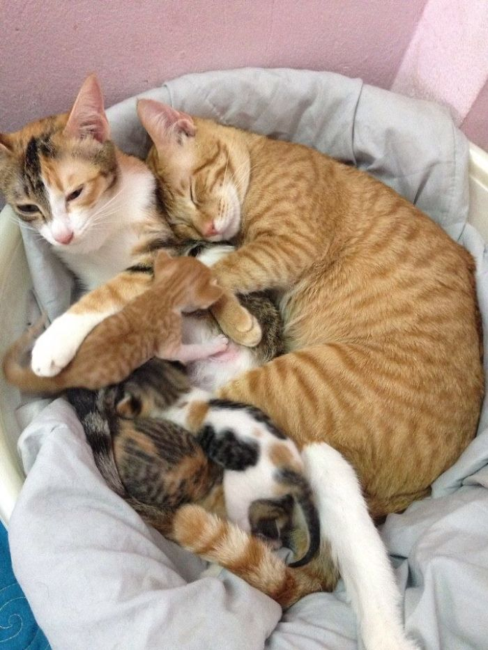 Best First Mum Cats