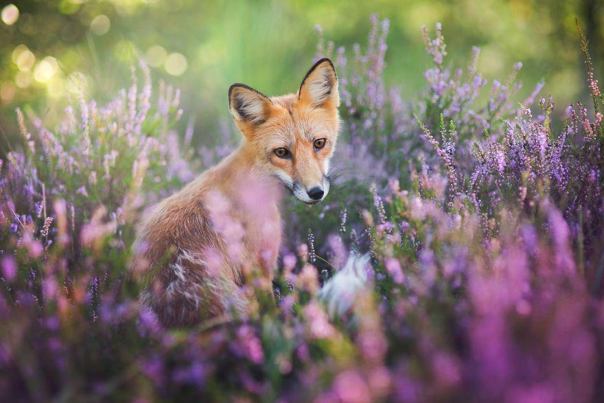 Foxy Photos