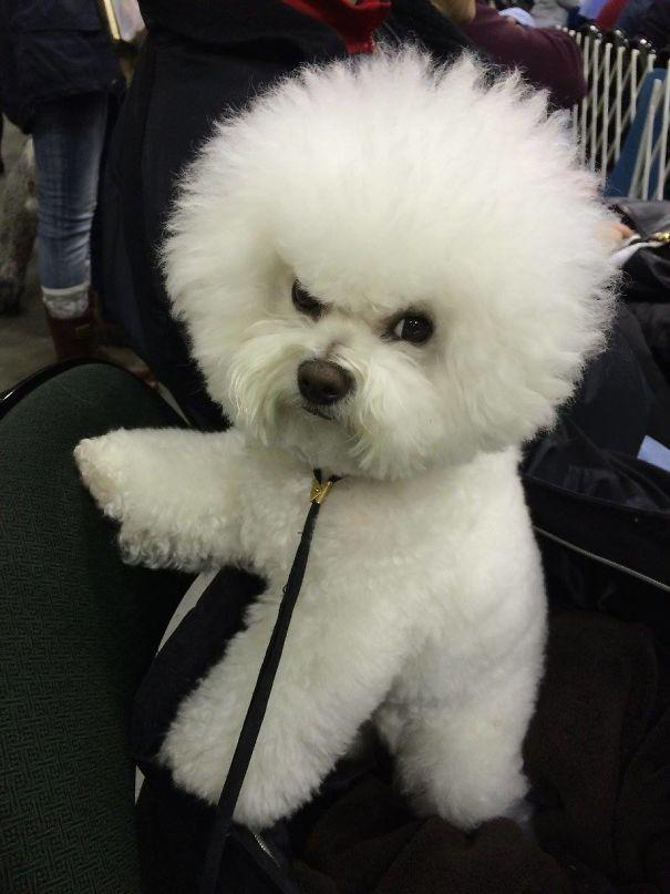 Mia The Grumpy Puppy