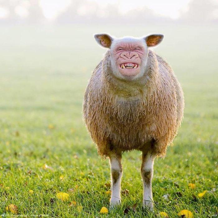 I Post Crazy Animal Hybrids That I Found On The Internet
