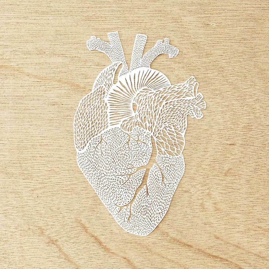 I Hand-Cut Anatomical Organs Out Of Paper