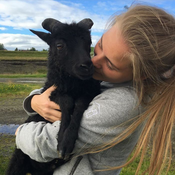 Lambs, Bright Nights And Warm Weather
