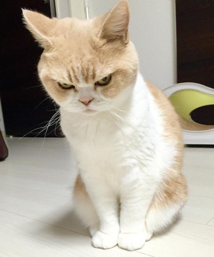 Grumpy Cat's Older Sister