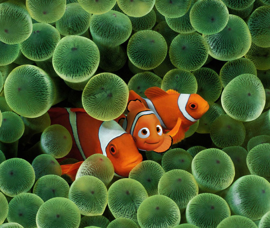 Finding The Real Nemo