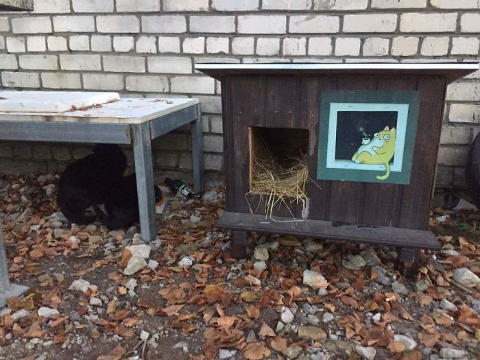 We Built Tiny Houses For Homeless Cats In Riga To Help Them Survive Winter