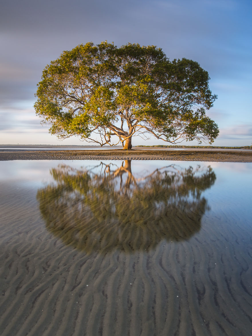 A Lone Tree On The Beach, QLD