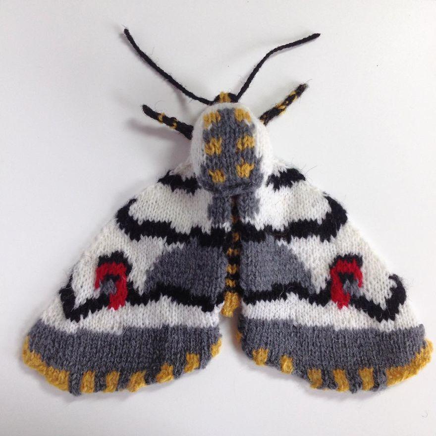 African Cherry Spot Moth (Diaphone Eumela)