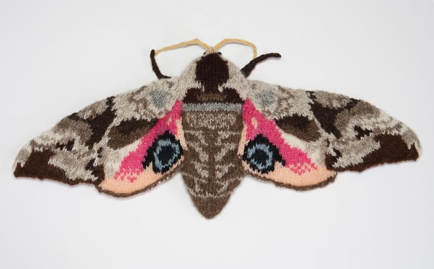 Knitted Eyed Hawk Moth