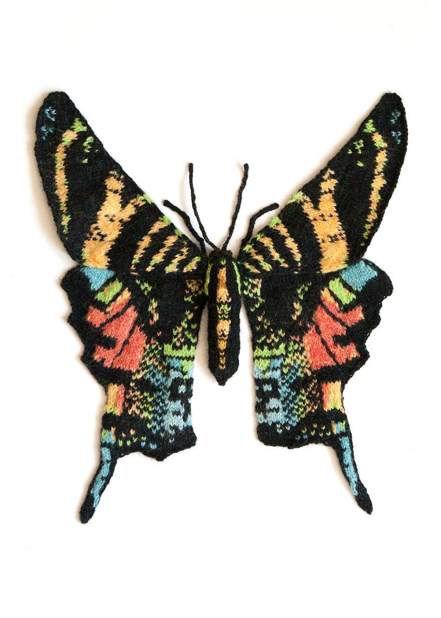 Sloane's Urania Moth (Urania Sloanus)