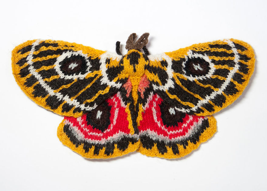 Zaddach's Emperor Moth (Bunaeopsis Oubie)