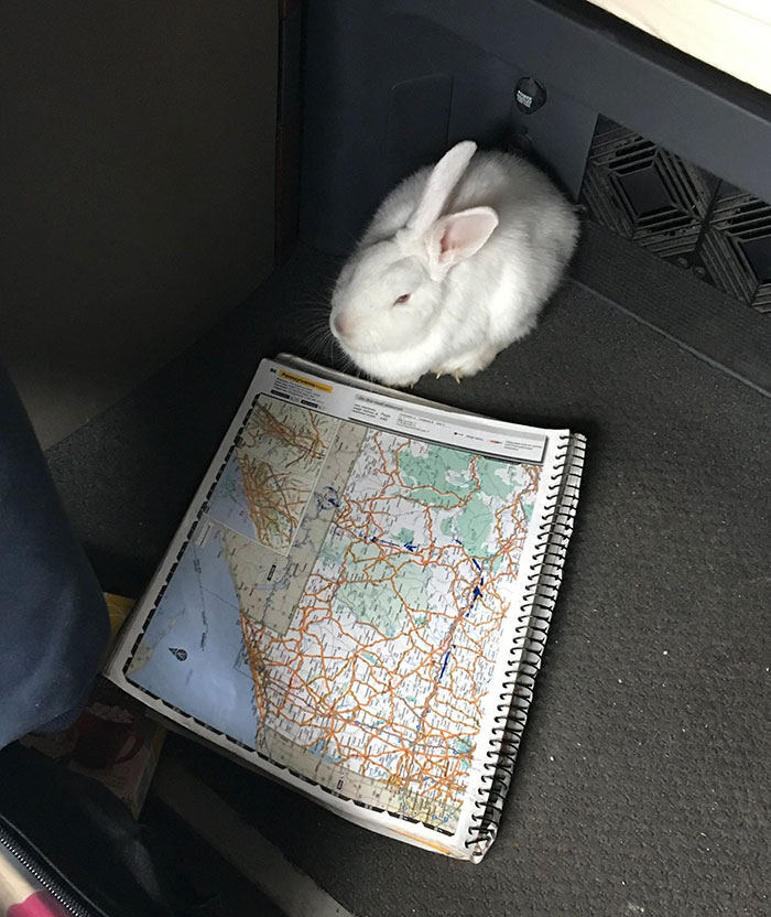 abandoned-dog-leads-rescuer-bunny-highway-interstate-3