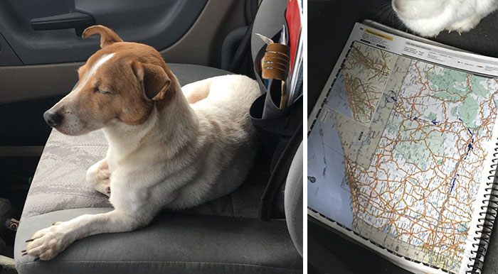 When This Stray Dog Refused To Be Saved, They Decided To Follow Him And Couldn't Believe Their Eyes