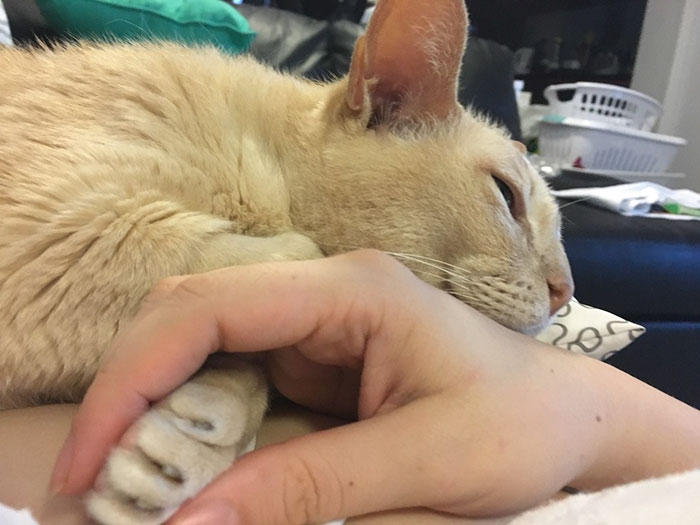 adopted-senior-cat-wants-holds-hands-jamie-2