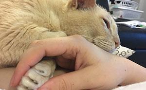 El gato de 13 años que ha sido adoptado de un refugio de animales no puede quedarse dormido a menos que su dueña agarre su pata