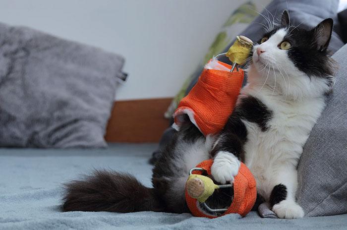 amputee-cat-bionic-legs-pooh-bulgaria-2