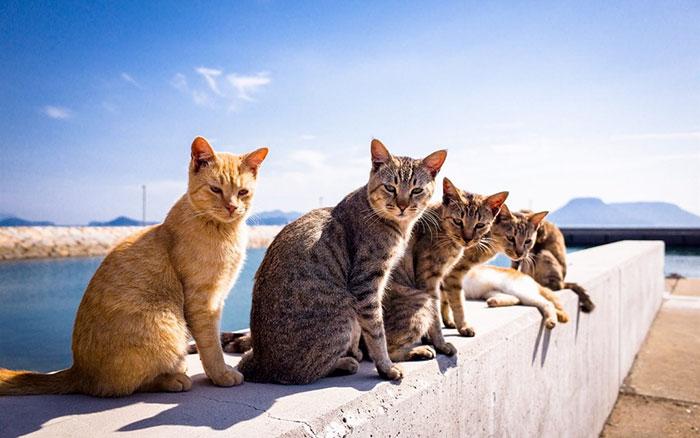 Estos Gatos Tienen La Canción Del Verano
