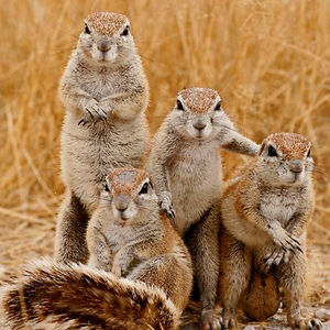 The Hard Rock Squirrels