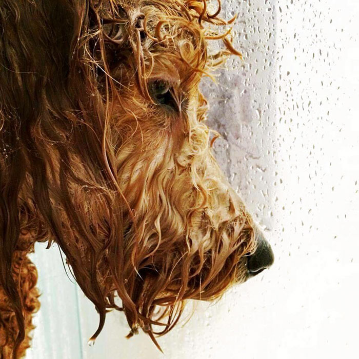 This Dog In The Shower Look Like He About To Drop The Hottest Album