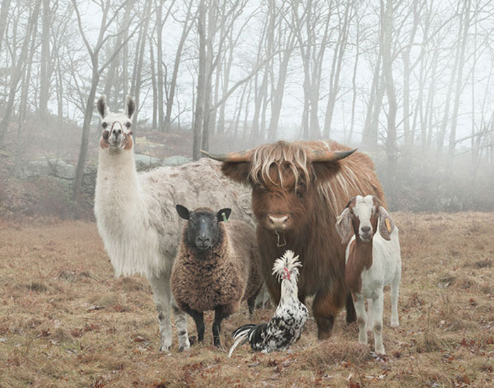 10+ Animals That Look Like They're About To Drop The Hottest Albums Of The Year
