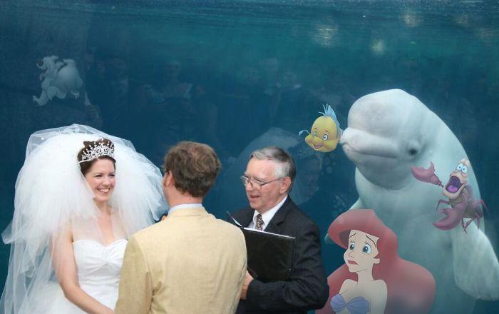 Hasil photoshop dari foto asli saat paus beluga menyaksikan prosesi pernikahan sakral di akuarium Mystic, Connecticut, Amerika Serikat.