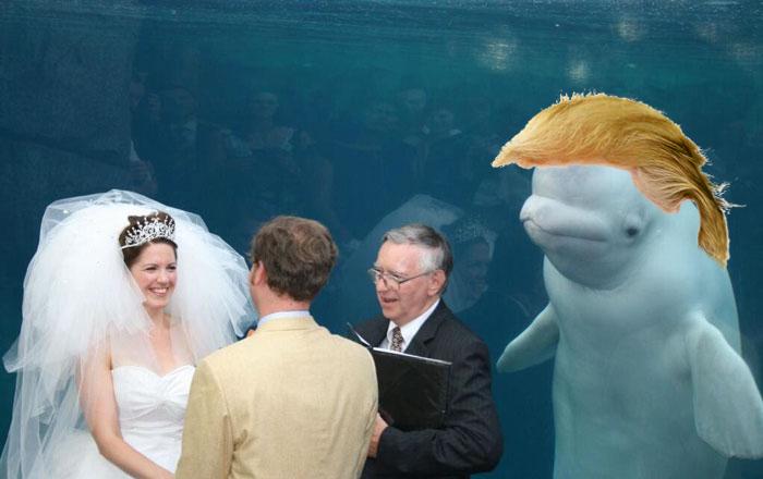 Yuge Beluga…