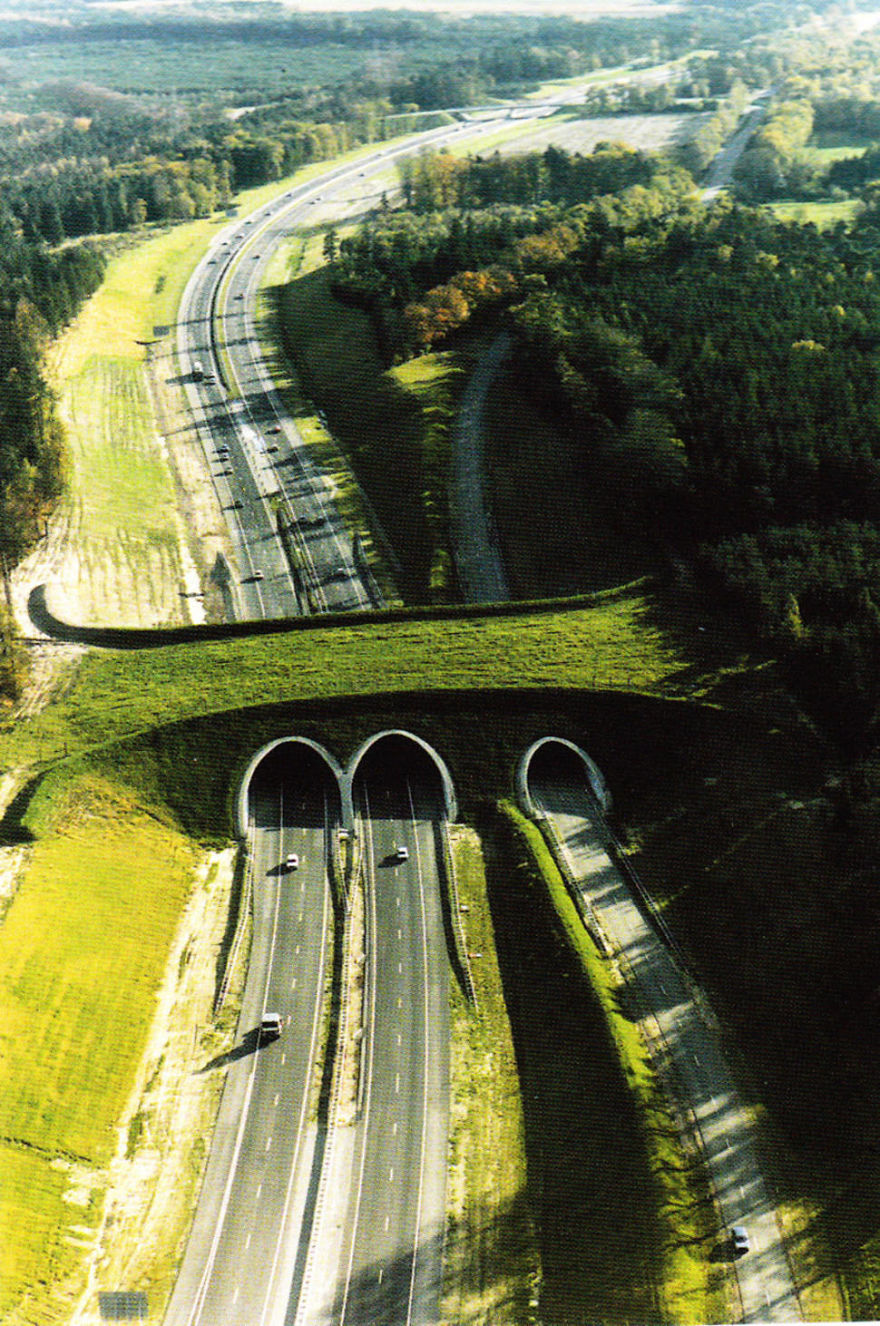 Ecoduct In The Netherlands