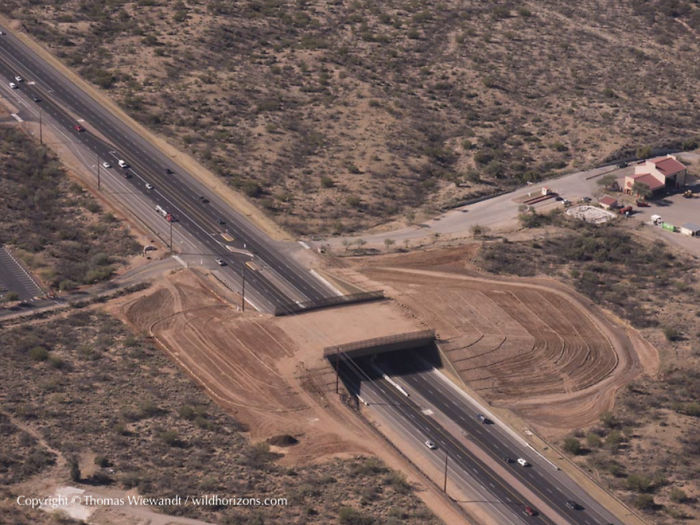 Cruce para animales en el desierto de Sonora