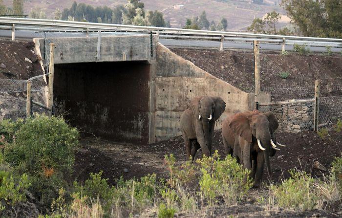 Paso subterráneo para elefantes en Kenia