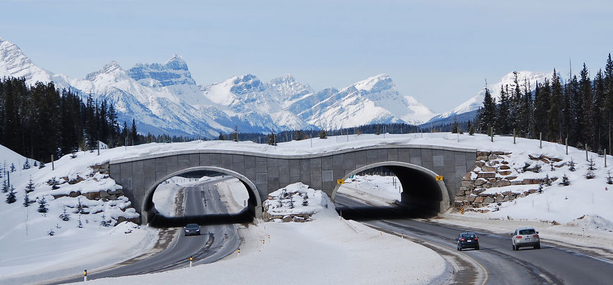 Bear Overpass In Banff National Park, Canada