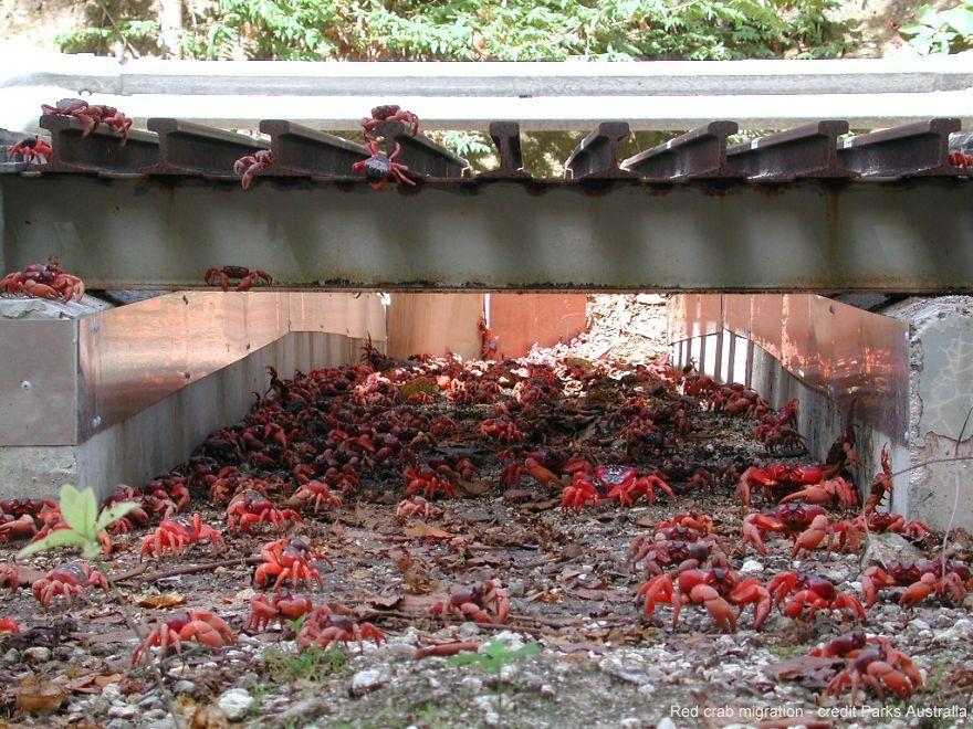 Red Crab Tunnel On Australia's Christmas Island
