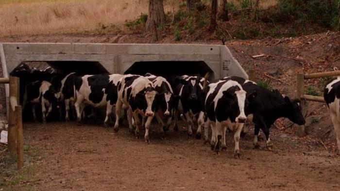 Paso subterráneo para el ganado en Victoria, Australia