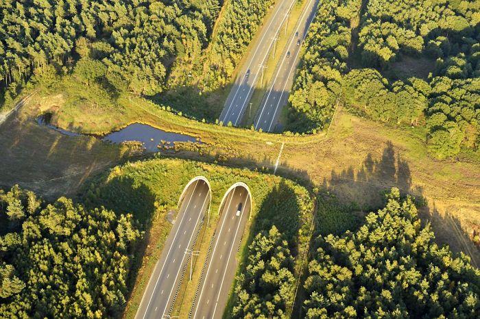 Cruce para animales salvajes en Holanda