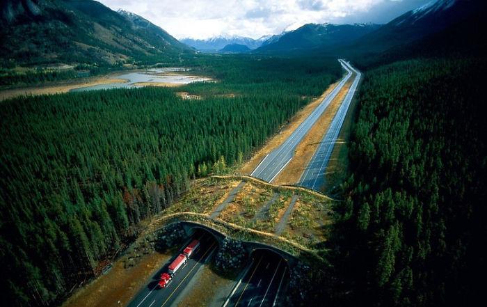 Ecoducto en el parque nacional de Banff, Canadá