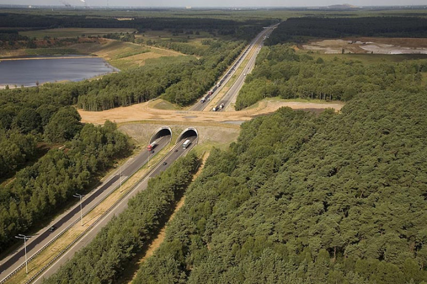 Ecoduct In Belgium