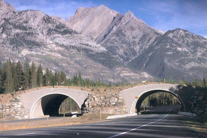 Cruce para animales salvajes en Alberta, Canadá