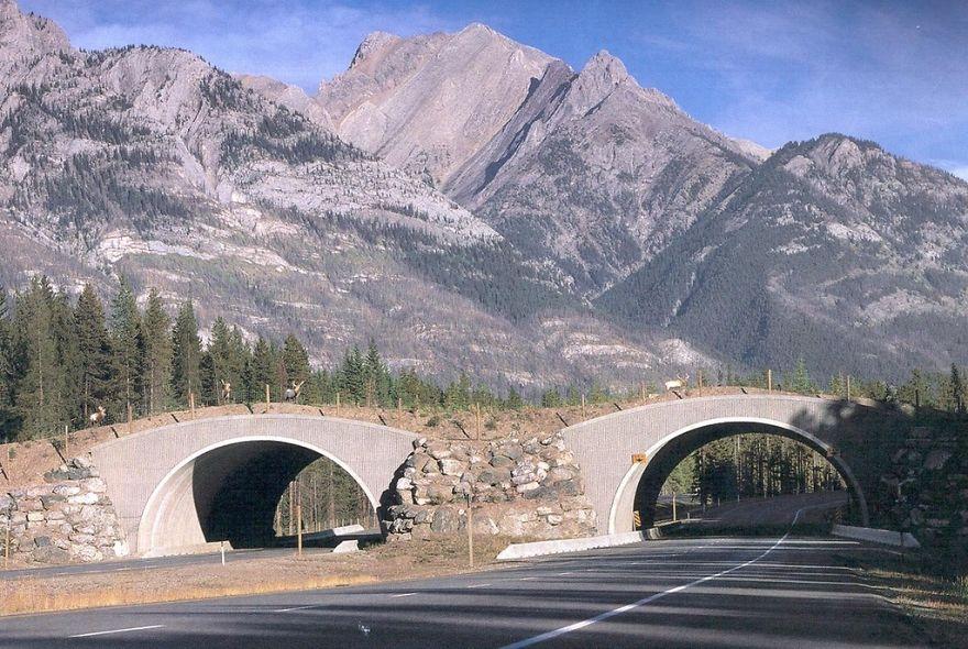 Wildlife Passing In Alberta, Canada