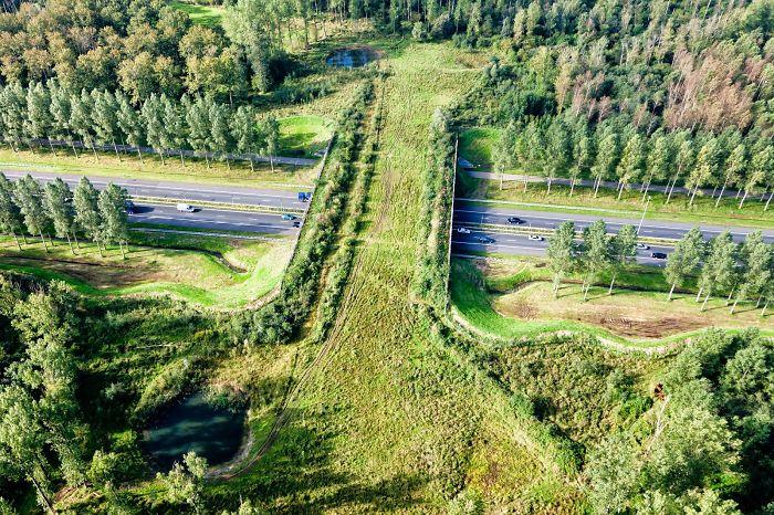 Puente para animales al norte de Brabante, Holanda