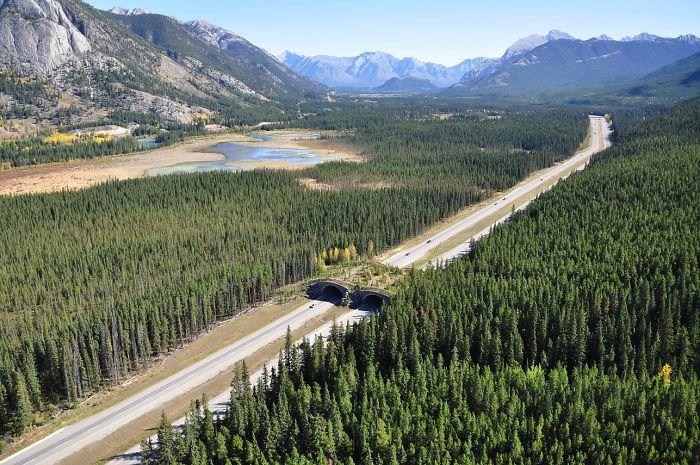 Puente para animales cerca de Banff, Canadá