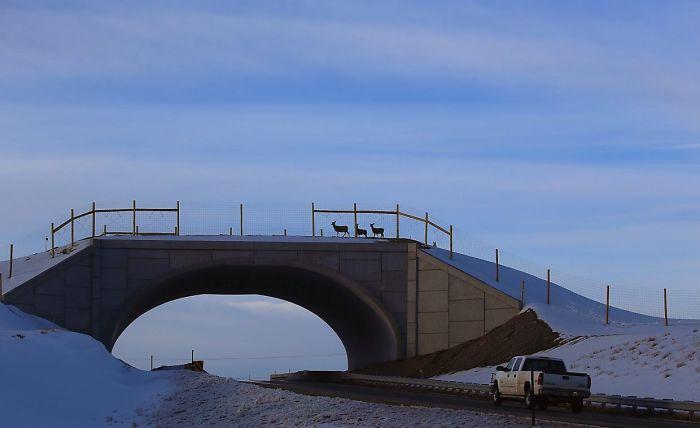 Ecoducto en Colorado