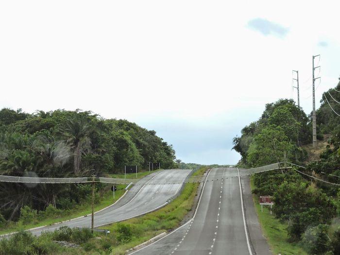 Puente para monos y otros animales cruzando la carretera en Bahia, Brasil