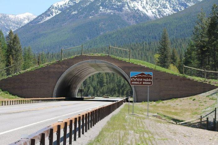 Puente para animales en Montana