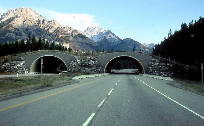 Paso para animales en Alberta, Canadá