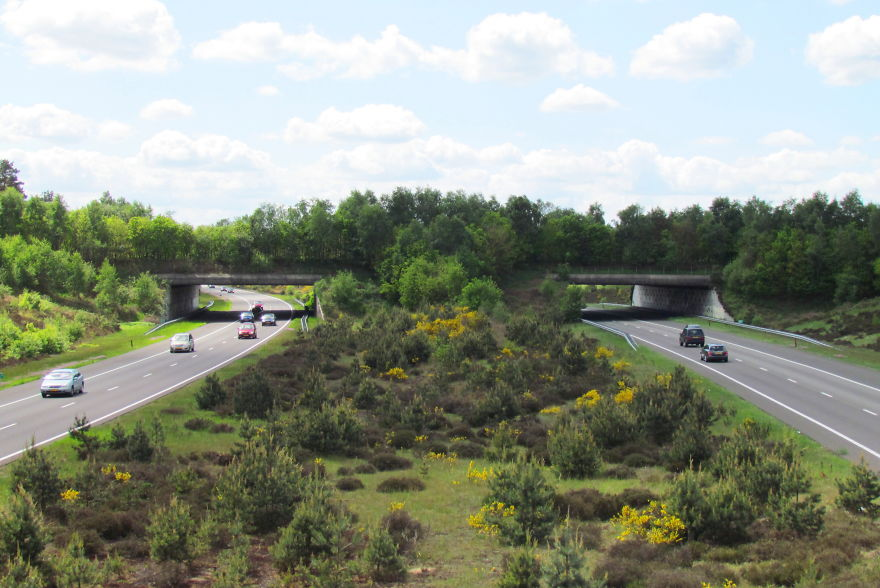 Ecoduct 'Harm Van De Veen' In The Netherlands