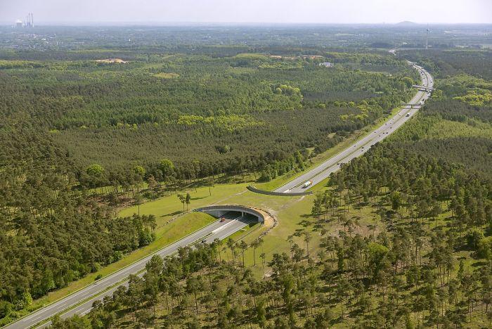 Puente verde para animales sobre una autopista alemana